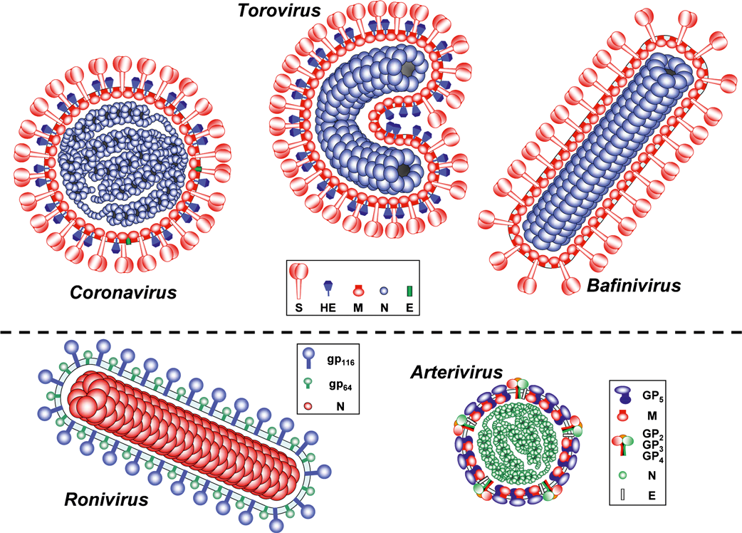 The Wuhan crisis - The coronavirus discovered in China is causing global alarm China The Economist