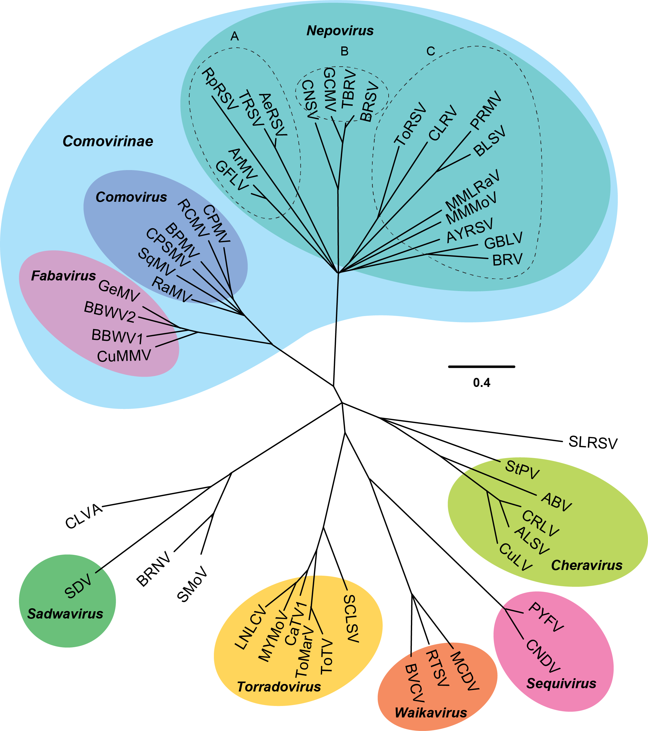 The Families of the Monocotyledons: Structure, Evolution, and Taxonomy